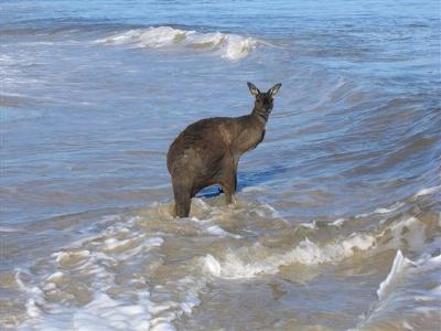 2006-01-26--Australia_Day.jpg